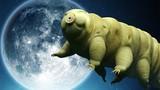 """Chân dung 5 sinh vật """"bất tử"""" cả khi sống ở ngoài Trái Đất"""