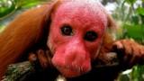 Hết hồn những sinh vật có khuôn mặt như quỷ ám ảnh người nhìn