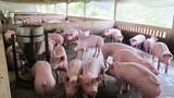 Lộ diện 5 đại gia trộn chất cấm trong thức ăn chăn nuôi