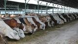 Bầu Đức bán bò, kiếm hơn 1.200 tỷ đồng