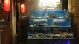 Hải sản Nhật đang bơi: Sáng ở Tokyo, chiều lên bàn nhậu Hà Nội