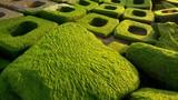 Đổ xô đến Phú Yên ngắm những khối bê tông rêu phong xanh ngắt