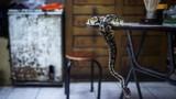 Soi những cửa hàng rắn kinh hoàng ở Hong Kong
