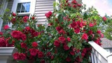 """7 loại cây """"xịn"""" như điều hòa, giúp nhà mát lịm"""