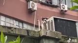 Video: Mèo hoang nổi tiếng vì có gương mặt khắc khổ