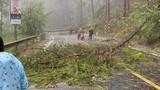 Đà Lạt tan hoang sau trận mưa, netizen nhìn mà xót xa