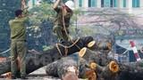 Sự thật đằng sau vụ chặt 6.700 cây xanh ở Hà Nội