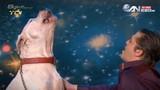 Chú chó kỳ lạ có biệt tài hát như Whitney Houston
