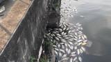 Mục kích 30 cống xả thải ra Hồ Tây, đe doạ môi trường hồ