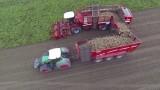 Đây là cách người nước ngoài thu hoạch củ đậu