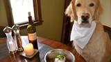 Chết cười với chú chó ăn tạp nhất quả đất