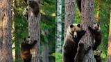 Bộ ảnh ngộ nghĩnh, đáng yêu về gia đình gấu nâu