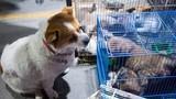 Chó con bị đem bán, hành động của chó mẹ làm ai cũng rưng rưng