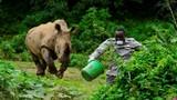 Ảnh động vật: Tê giác khổng lồ truy đuổi người chăm sóc động vật