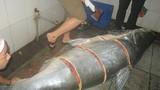 Tân mục cá tra dầu 230kg nhà hàng ở An Giang vừa mua