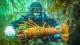 Gian nan nghề lặn bắt tôm hùm dưới đáy biển