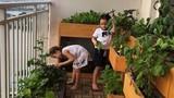 Ca sĩ Hồng Nhung trồng rau bằng đất sét, nuôi cá trên ban công