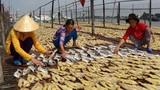 """""""Đột nhập"""" thủ phủ khô cá tra miền Tây hút khách dịp Tết"""