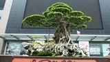 Xôn xao những thương vụ mua bán siêu cây bạc tỷ của đại gia Việt