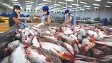 Vua cá tra Hùng Vương giải thích việc lỗ nặng vì… nuôi heo