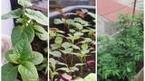 Cách trồng 6 loại rau sân thượng trong vụ xuân hè
