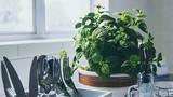 Phong thủy nhà bếp cần kiêng kị những gì?