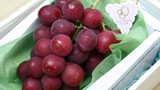 Nho Nhật về Việt Nam giá 11 triệu đồng/chùm được trồng thế nào?