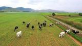 """""""Đổ"""" 1.000 tỷ vào resort bò sữa Lào, Vinamilk dẫn đầu thị trường?"""