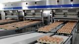 Cty tỷ phú Trần Đình Long bán 550 nghìn trứng/ngày... kiếm đậm?