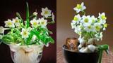 5 loại hoa hút tài lộc, cuối năm nên bày trong nhà để thêm sung túc