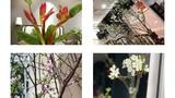 4 loại hoa rừng được dân Hà thành lùng chơi Tết