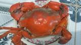 Cua biển Cà Mau bổ béo gì... giá 1 triệu đồng/kg?