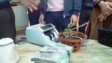 Xôn xao lan Hồng Bồng Lai được bán với giá hơn 1,6 tỷ đồng