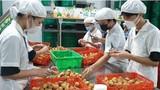 20 tấn vải thiều sớm Bắc Giang xuất khẩu sang thị trường Nhật Bản