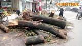 """HN chặt cây xanh: """"Làm cho khốc hại chẳng qua vì… tiền""""?"""