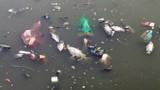 Cảnh kinh hoàng trên dòng kênh đẹp nhất Sài Gòn