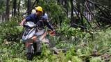 TP HCM: Mưa lớn, cây xanh đổ hàng loạt làm nhiều người bị thương