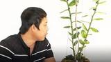 Ly kỳ chậu lan Giả hạc đột biến ở Lâm Đồng mua 1 triệu bán 5 tỷ đồng