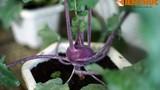 Soi loạt rau, hoa, củ, quả độc lạ gây sốt ở Đà Lạt