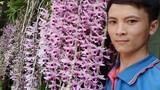 """Trai Đắk Nông khoe giò lan rừng phi điệp tím """"khủng"""", dân tình phát sốt"""
