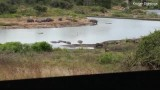 Video: Gặp hà mã lo chuyện bao đồng, cá sấu ôm uất hận