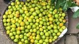 Ngập chợ là những loại quả này, hàng Trung Quốc chị em vẫn tranh nhau mua