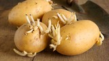 4 loại thực phẩm mọc mầm cực độc, ăn vào dễ toi mạng!