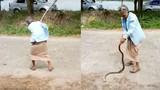 Video: Thấy rắn ăn thịt cóc, bà cụ làm điều khiến dân mạng sửng sốt