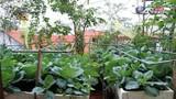 Vườn rau trên sân thượng cho 4 gia đình ở Hà Nội