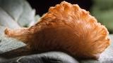 Video: 10 loài vật nhỏ bé nhưng nguy hiểm nhất thế giới