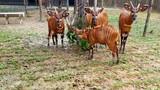 """4 """"F1"""" hổ quý Bengal chào đời tại Vinpearl Safari"""