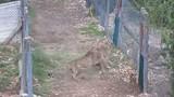 Clip: Kẻ ngoài hàng rào kích động hai báo săn ẩu đả lẫn nhau