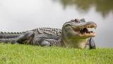 """Phát hiện bất ngờ về """"nước mắt cá sấu"""": Bôi trơn thức ăn"""