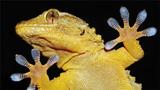 Những bàn chân kỳ quái có khả năng phi phàm nhất thế giới động vật